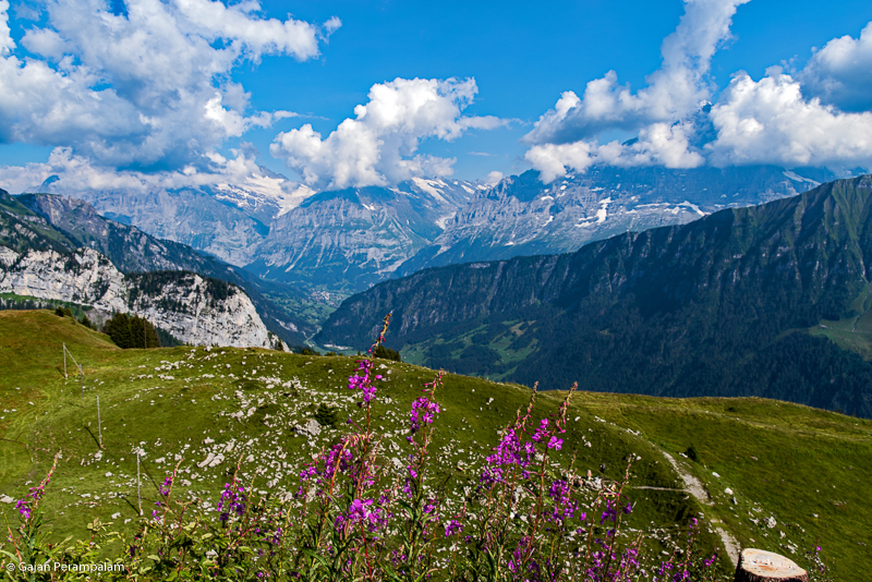 Bernese Alps from Schynige Platte, Switzerland